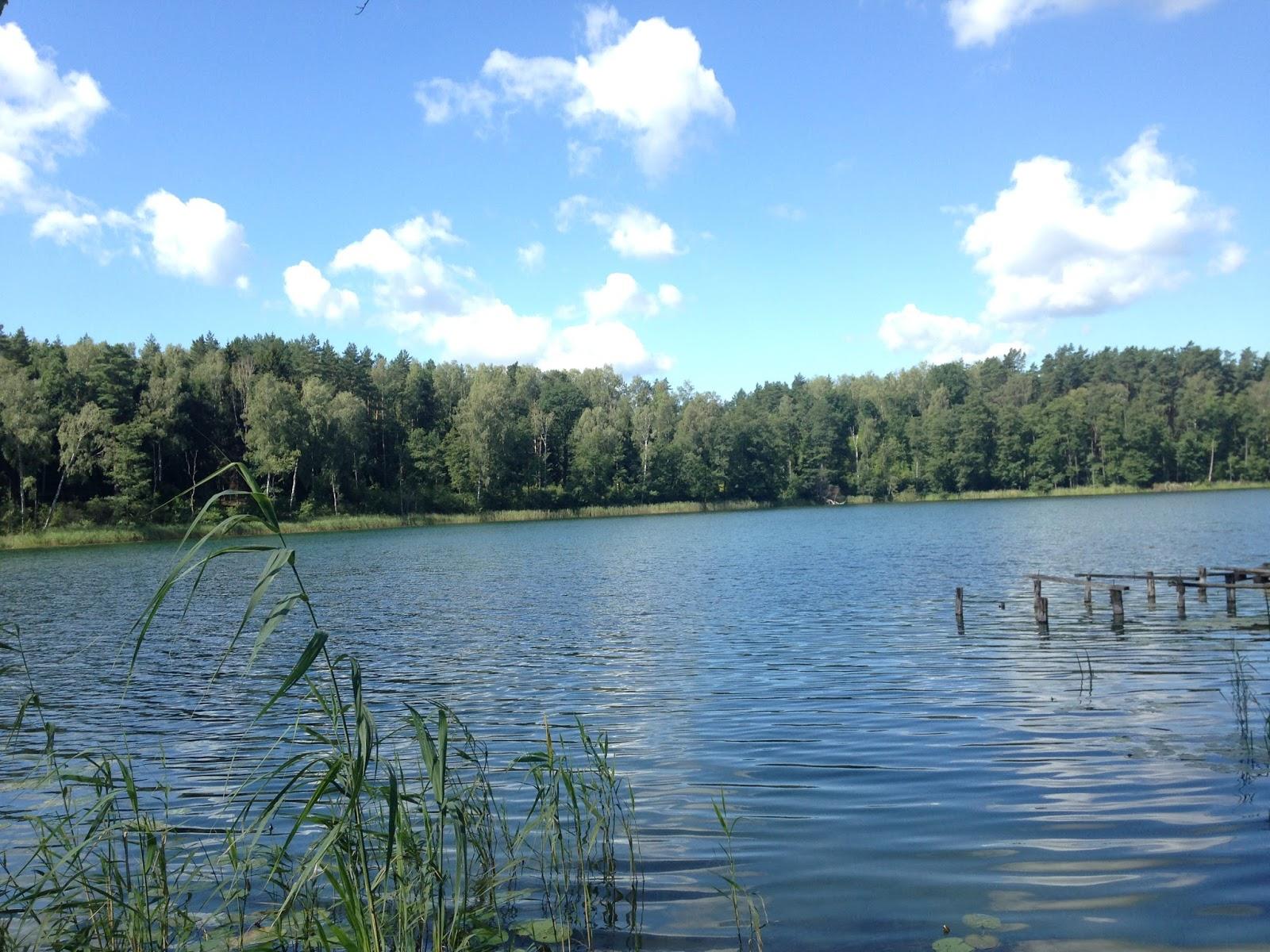 zdjęcie jeziora latem
