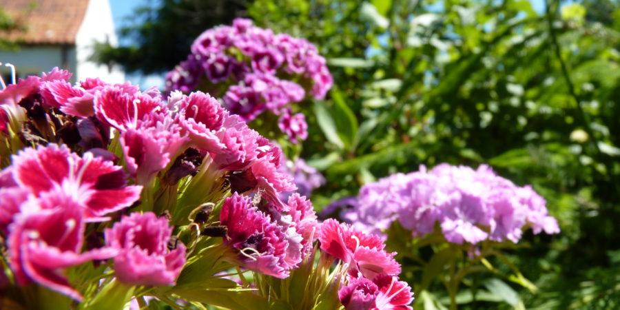 Wakacje u babci kwiaty