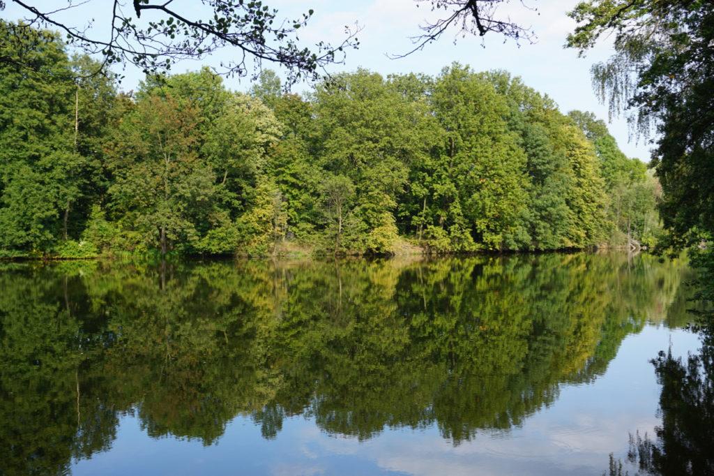 Drzewa odbijaja sie w jeziorze